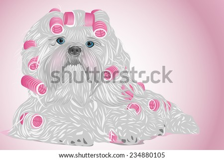 Shih tzu female dog with curlers. EPS 10 format.