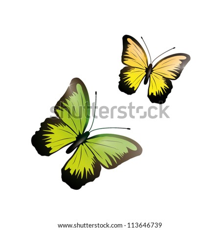 Shiny green and yellow butterfly isolated