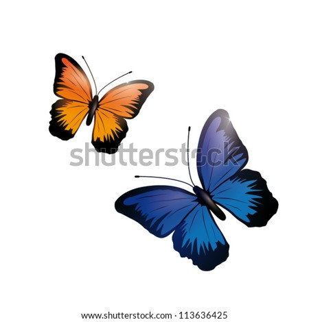 shiny orange and blue butterfly isolated