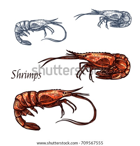 Shrimp or prawn sketch. Vector isolated icon of crayfish crustaceans marine fauna species animal with claws for seafood restaurant sign, fishing club or fishery market