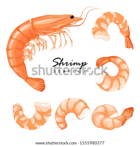 Shrimp prawn icons set. Boiled Shrimp drawing on a white background. Collection shrimp, shrimps without shell, shrimp meat. Realistic vector illustration