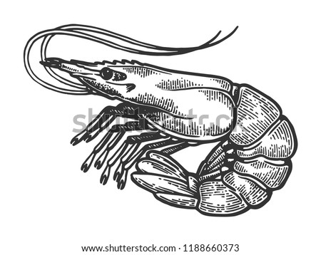 Shrimp sea Caridea animal engraving vector illustration. Scratch board style imitation. Black and white hand drawn image.