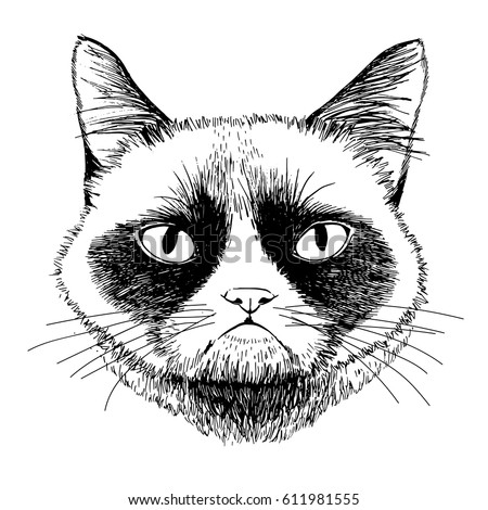 siamese grumpy cat isolated on