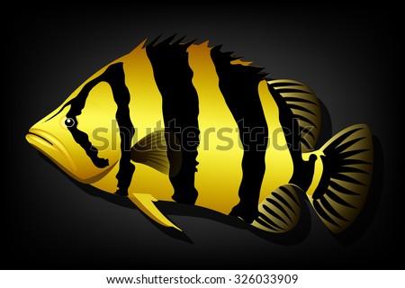 siamese tiger fish vector image