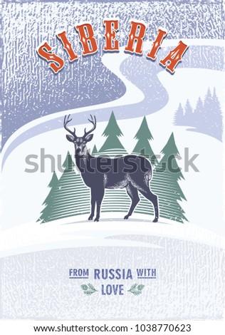 siberia  reindeer on the