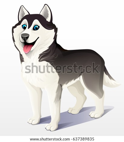 siberian husky dog black and