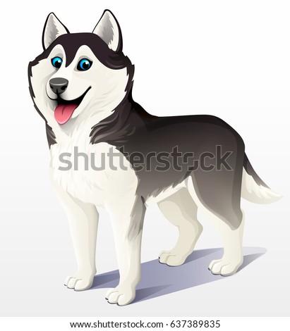 siberian husky dog black and