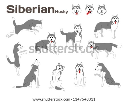 siberian husky illustration dog
