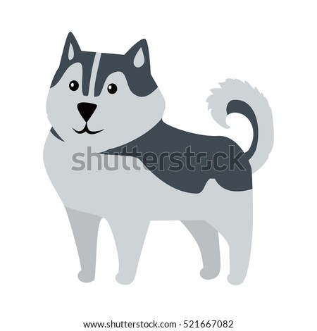 siberian husky medium size