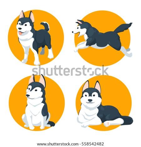 siberian husky set c