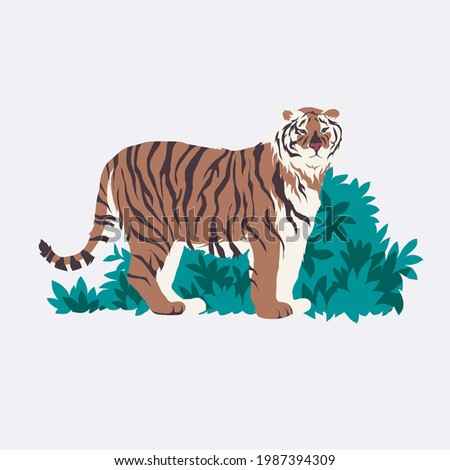 siberian tiger isolated vector