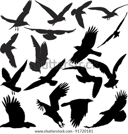 silhouette birds - stock vector