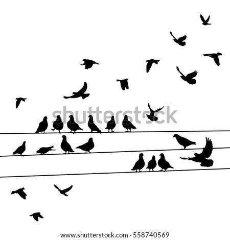 silhouette birds  pigeons