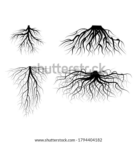 silhouette black tree roots
