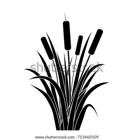 silhouette black water reed