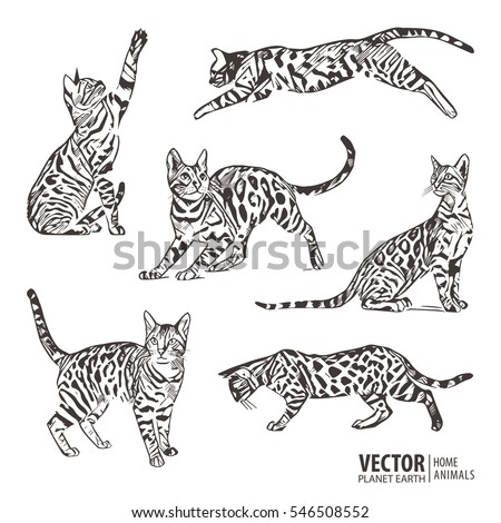 silhouette cats pattern
