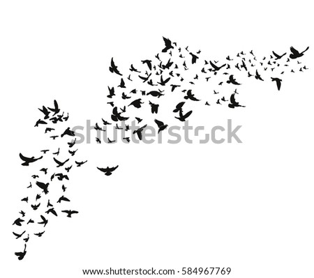 silhouette flying birds on