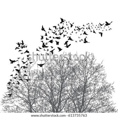silhouette flying birds vector