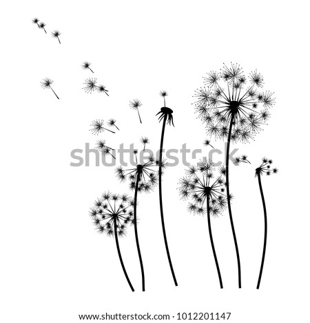 silhouette of a dandelion with