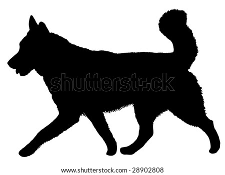 Silhouette of a dog of breed Alaskan Malamute