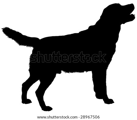 Silhouette of a dog of breed labrador retriever - stock vector