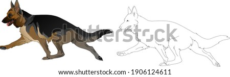 Silhouette of a dog running around the German Shepherd breed  The beautiful head of the German Shepherd A set of elements for the logo Photo stock ©