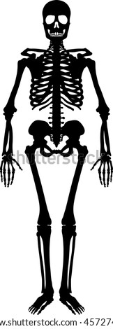Silhouette of a human skeleton