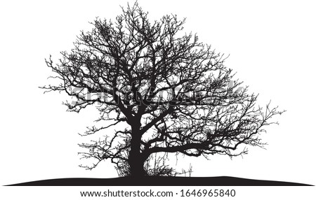 silhouette of a natural oak on