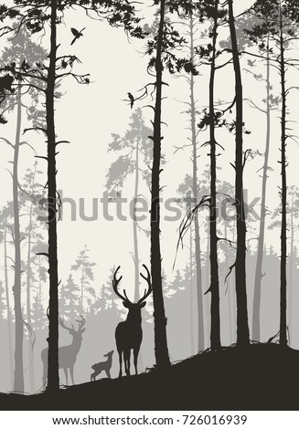 silhouette of a pine forest