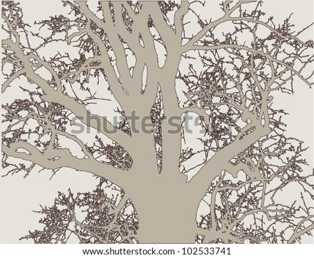 silhouette of a tree in shades of gray
