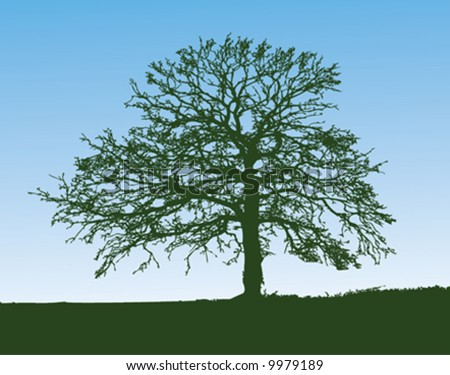 stock vector : Silhouette of an oak tree on a hill