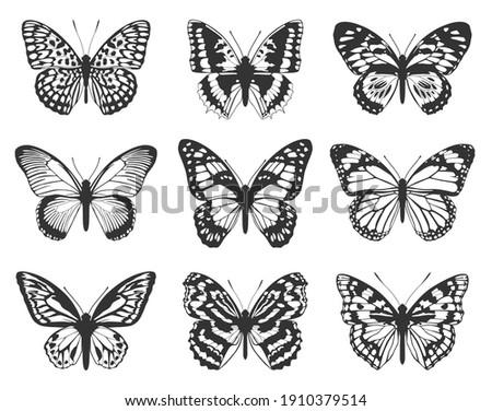 Silhouette of black butterflies. Collection of butterflies.