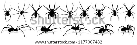 Silhouette of black spider. Stock photo ©
