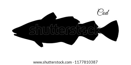 Silhouette of cod fish. Hand drawn vector illustration isolated on white background.
