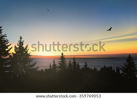 silhouette of  coniferous