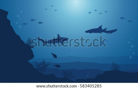 silhouette of fish various on