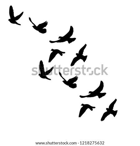 silhouette of flocks of birds