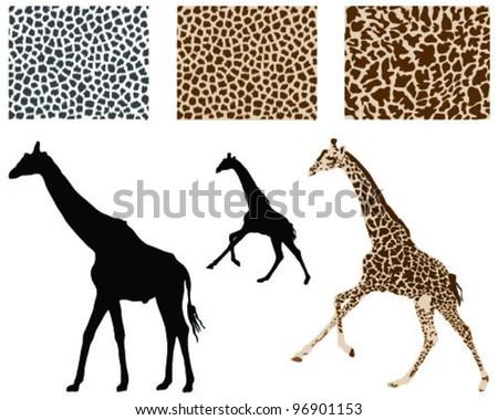 Giraffe Silhouette Silhouette of Giraffes And