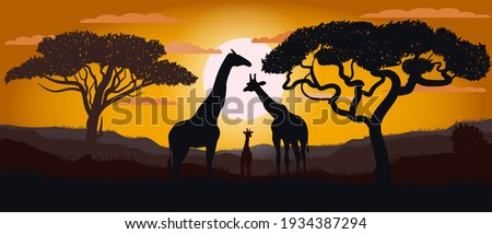 silhouette of giraffes of the