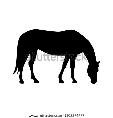 silhouette of grazing horse