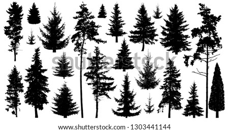 Silhouette of pine trees. Set of forest trees isolated on white background. Collection coniferous evergreen forest trees. Christmas tree, fir-tree, pine, pine-tree, Scotch fir, cedar