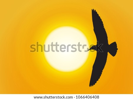 silhouette of seagull flying on