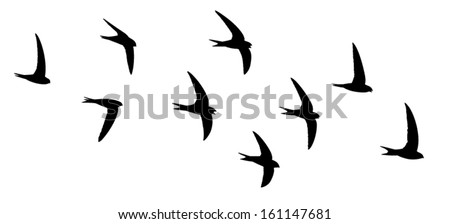 silhouette of the birds in