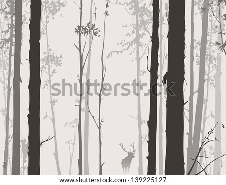 silhouette of the forest with