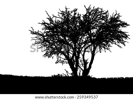 silhouette of tree   bush with