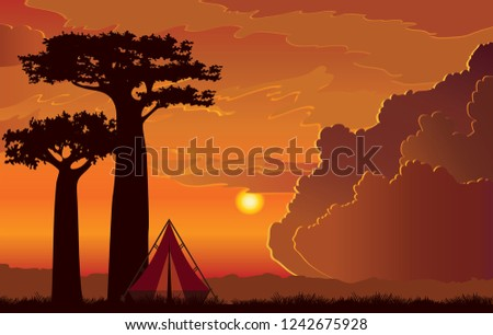 silhouette of two baobab trees