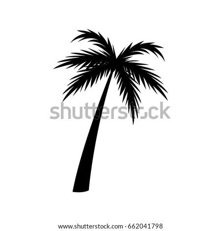 silhouette palm tree tropical natural