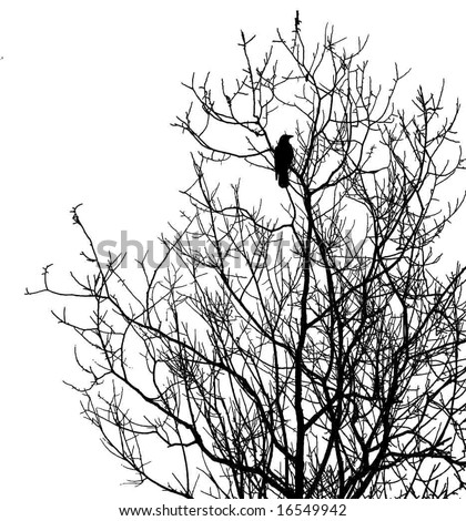 silhouette ravens on tree isolated on white background