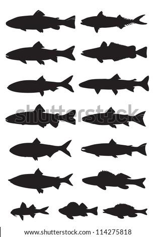 silhouette sea fish