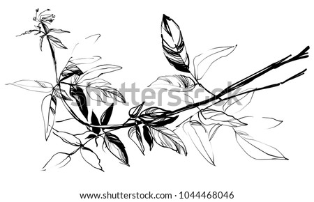 silhouette, vector, flower, design, herbal, background, black, white, grass, illustration, floral, leaf, botanical, plant, isolated, nature, garden, herbs, summer, graphic, vintage, flora, drawing, sp
